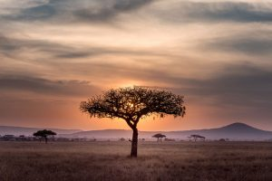 Africa trips